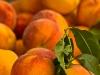 Peaches at Union Square Market, New York